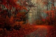 autumn misty morning trail