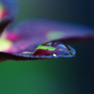 colour-filled droplet