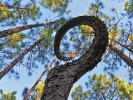 'Spiraling' flickrcc.net
