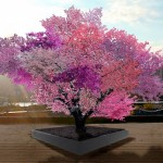tree-of-forty-fruit