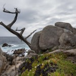 'Dead Tree' flickrcc.net
